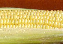 Kukurūzas