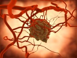 Navikas su kraujagyslėmis
