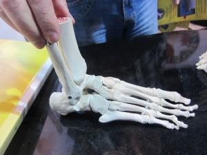 Kojos pėda
