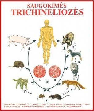 Trichineliozė
