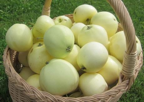 Obuoliai