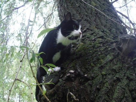 Katė medyje