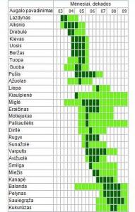 Augalų žydėjimo kalendorius