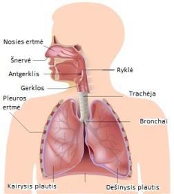 Kvėpavimo sistema