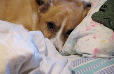 Šuo lovoje