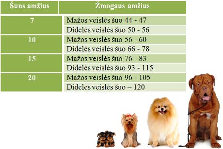 Šunų amžius