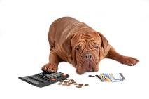pinigai ir šuo