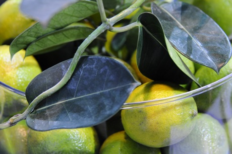 citrina laimas