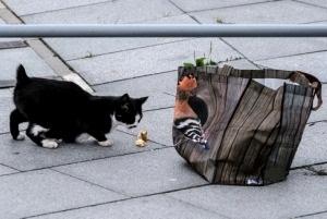 Beuodegė katė