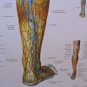 Kojos kraujagyslės