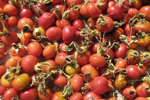 Raukšlėtalapio erškėčio vaisiai