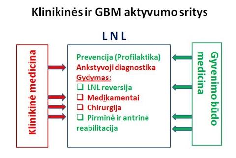 Schema Nr. 2. GBM ir klinikinės medicinos aktyvumo sritys
