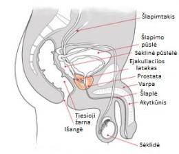 kreivos varpos priežastis nosies dydis ir varpos dydis