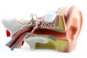 hipertenzija klausos sutrikimas