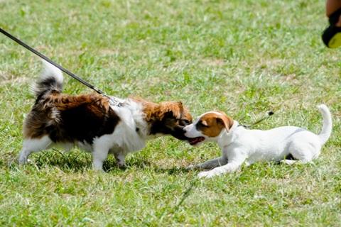 Du šuniukai