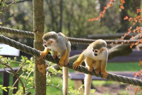 Beždžionės