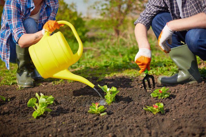 Gėlių sodinimas ir laistymas
