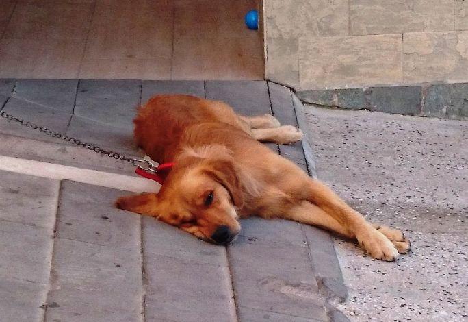 hipertenzija šunims simptomai