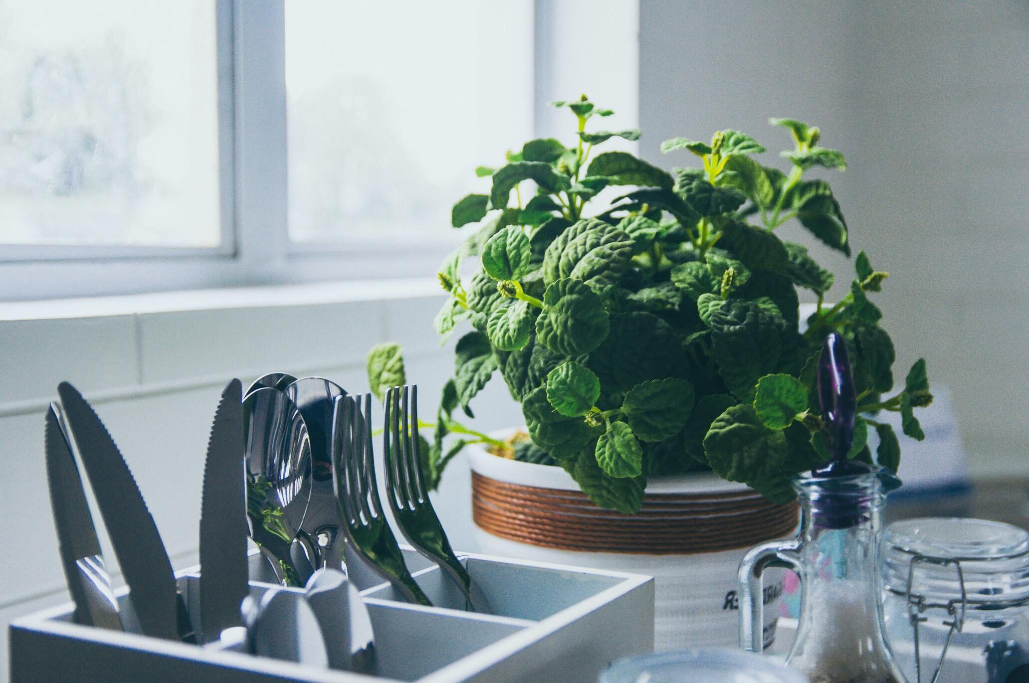 Virtuvėje vazonas su prieskoninėm žolelėm