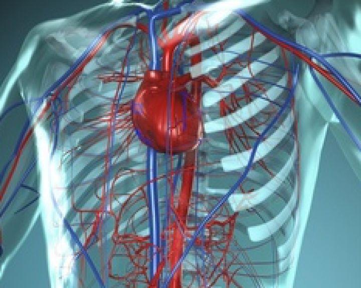 Ką apie širdies ligas reikia žinoti ir jauniems