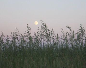 hipertenzijos su mėnulio šviesa receptas