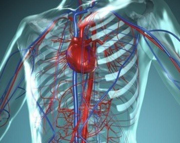 il1 širdies sveikata
