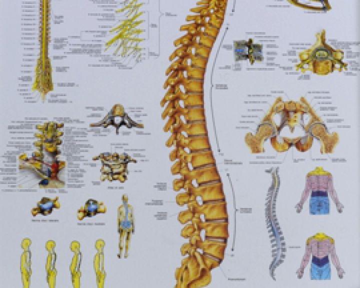 Galimi stuburo srities funkciniai sutrikimai, ūminiai ir lėtiniai susirgimai