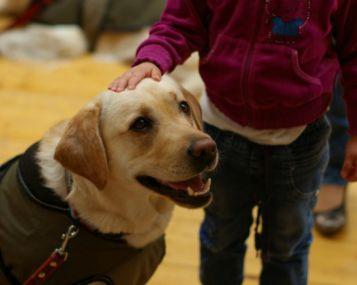 naminių gyvūnėlių sveikata alternatyvus gydymas šunų širdies kirminais)