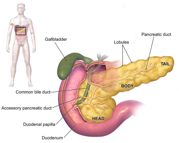 hipertenzija ir lėtinis pankreatitas)