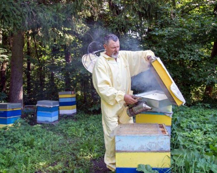 Neperšalti padeda bičių duonelė