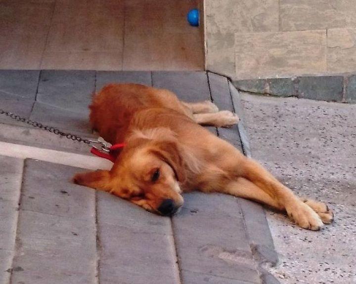 hipertenzija sergančių šunų simptomai