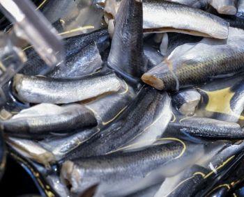 kokias žuvis galite sirgti hipertenzija